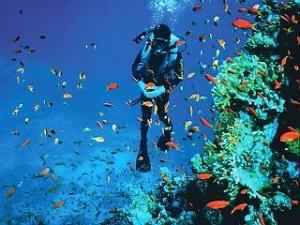 diving el gouna